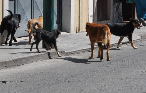 No hay campaña de vacunación de mascotas aclara dirección de salud.