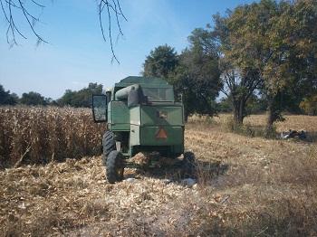 La maquina agrícola le paso por encima