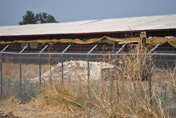 Se teme gripe Aviar en una granja de la empresa Bachoco en Tarimoro.