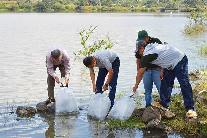 En total se depositaron 45 mil peces en los dos embalses