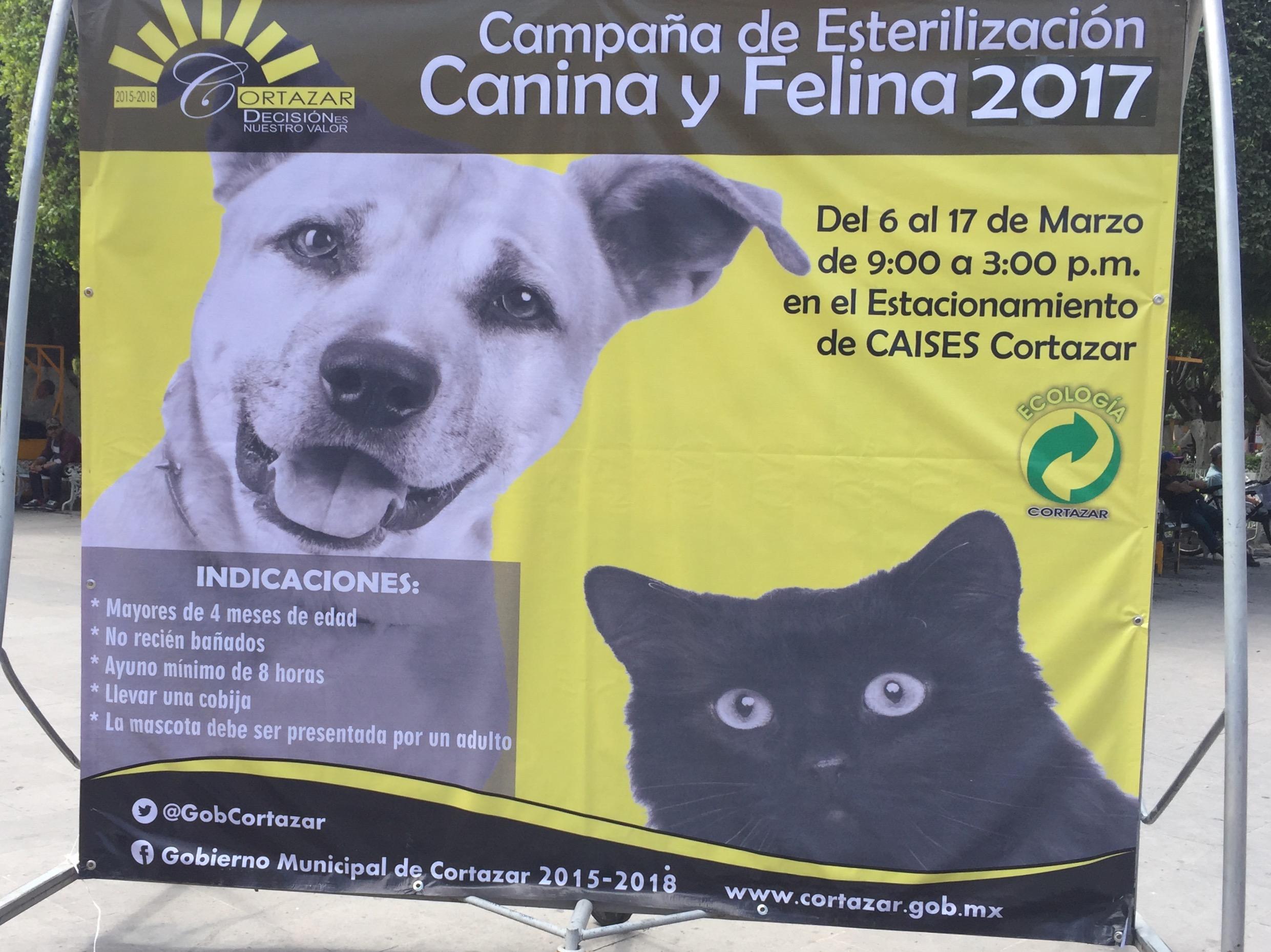 Por diferentes medios se da a conocer el programa de esterilización de mascotas perros y gatos, que finalizará el 17 de Marzo y que se realiza en el estacionamiento del Caises.